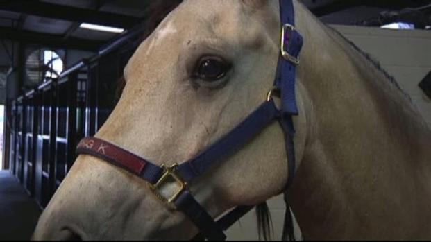 [DFW] Horse Owners On High Alert For Equine Virus