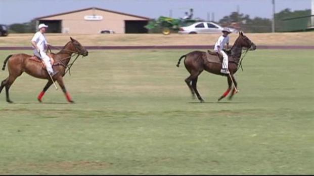 [DFW] Polo Popular in Denton?