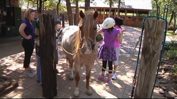 [DFW] SpiritHorse Therapeutic Center's Resources Drying Up