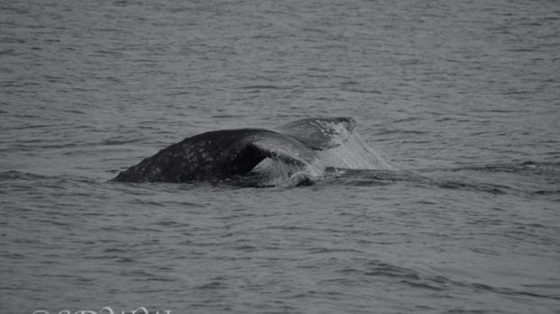 [DGO] Whale Watching Season Peaks in San Diego