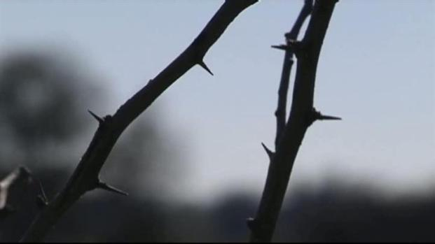 [DFW] Officials Urge Residents to Clear Dead Brush