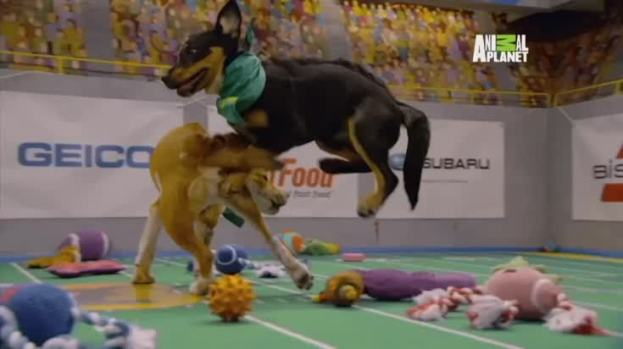 Recap From This Year's Adorable Puppy Bowl