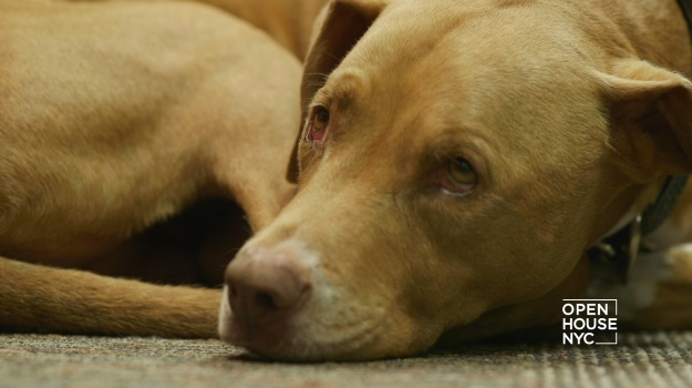 Coldwell Banker's Homes for Dogs Project