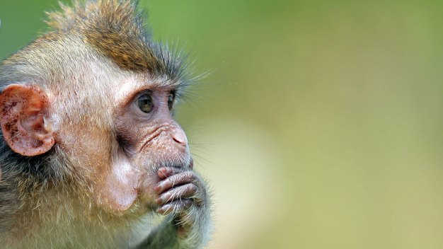 Texas Research Facility Fined for Deaths of Primates