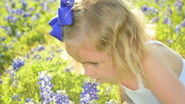 Bluebonnets in Bloom - April 27, 2016