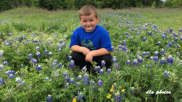 More Bluebonnets in Bloom - April 27, 2016