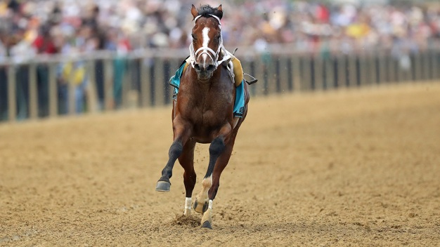Horsing Around: Riderless Colt Races to Preakness Finish