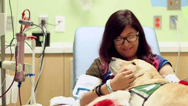 Therapy Dogs Help Hospitalized Patients