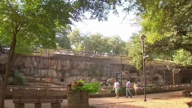 Dallas Zoo Saying Goodbye to Cat Row