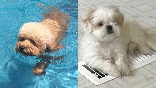 Dog Days of Summer -  Cooper & Libby