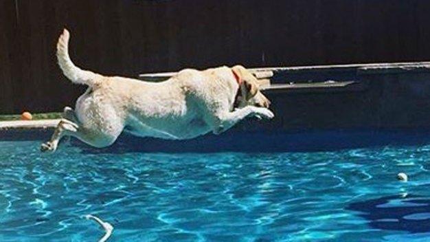 Dog Days of Summer - Gallery IV