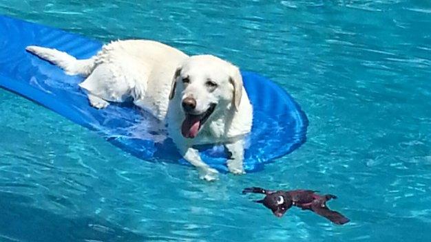 Dog Days of Summer - July 29, 2016