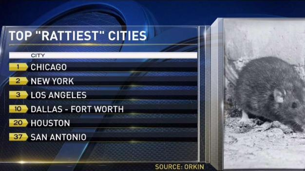 DFW Ranks in Orkin's Top 10 'Rattiest' Cities