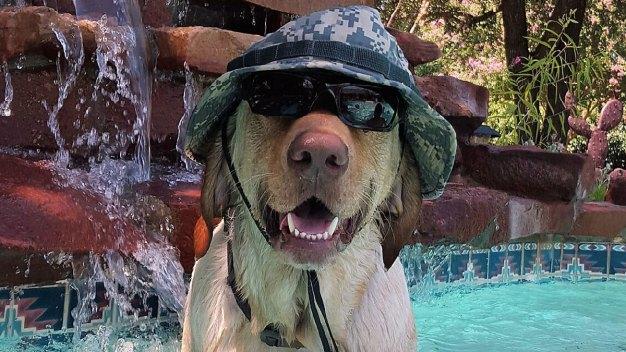 More Dog Days of Summer - June 21, 2016