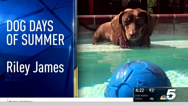 Dog Days of Summer - August 31, 2016