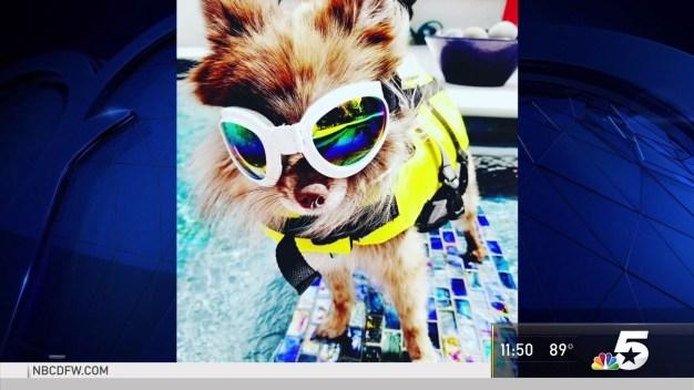 Dog Days of Summer - Aug. 31, 2018