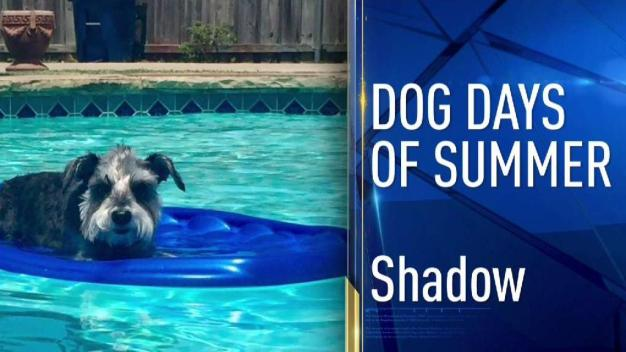 Dog Days of Summer - June 26, 2017