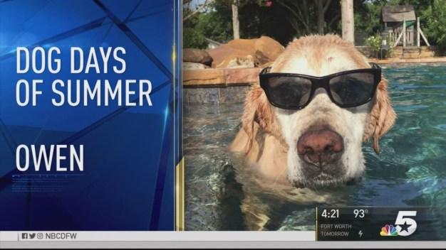 Dog Days of Summer - August 25, 2016