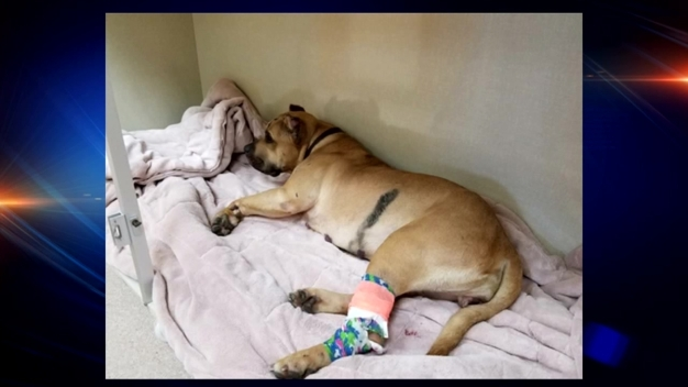 Dog Survives Fall From Bridge