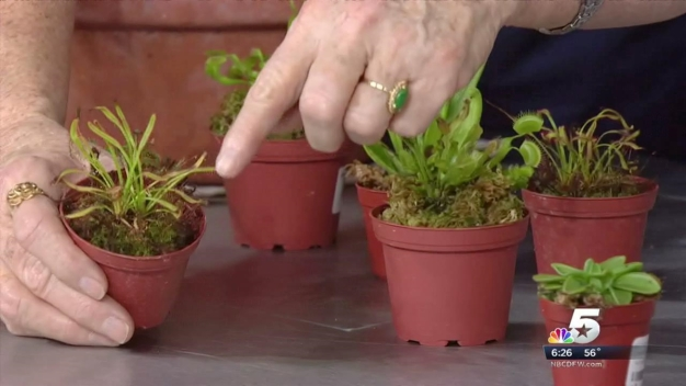 Dotty Shares Tips for Insect-Eating Plants