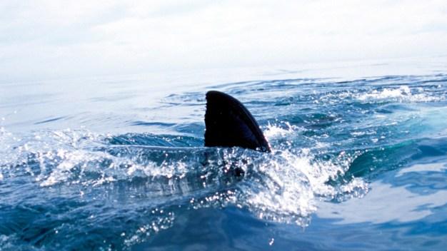 Waco Dentist Survives Shark Attack on Vacation