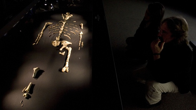 Famous Ancestor Lucy Killed by Fall from Tree: UT Study