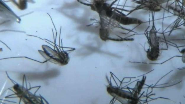 Plano City Trap Tested Positive for West Nile
