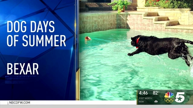 More Dog Days of Summer - August 18, 2016