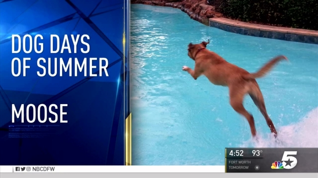 More Dog Days of Summer - Aug. 23, 2016