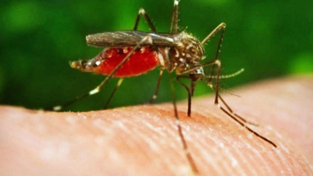 Plano Reports Human Case of West Nile Virus