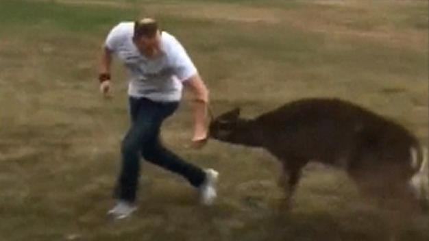 Deer Attacks Oklahoma Pastor