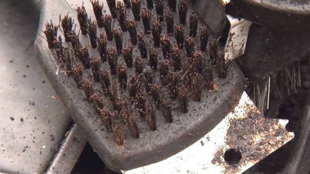 Grilling Danger: Bristles in Your Burgers