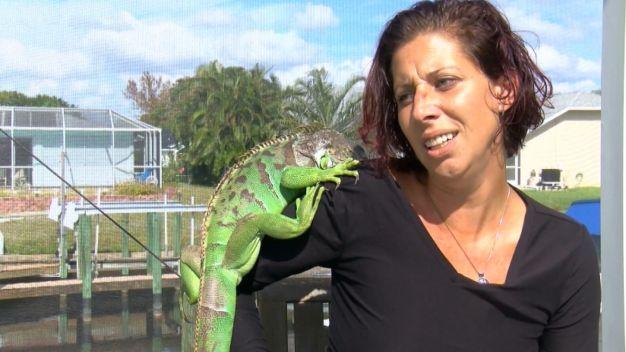 Woman's Pet Iguana Sends Her to Hospital