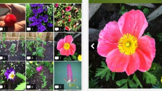 Apps Identify Plants in a Snap