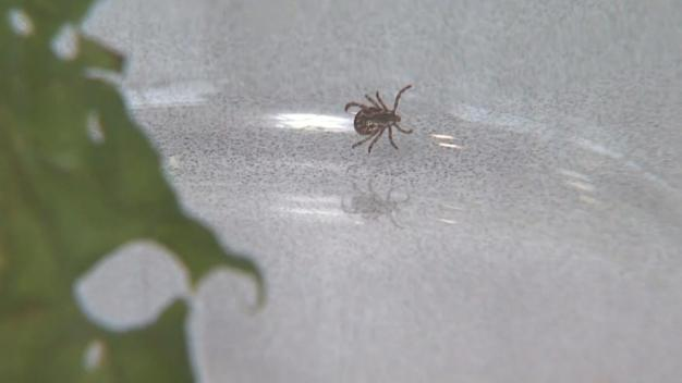 Woman Develops Meat Allergies After Tick Bite