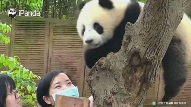 Panda Not a Fan of Selfies