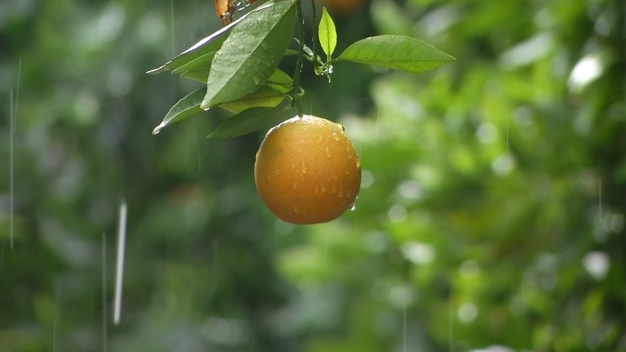 Dotty Woodson: Growing Fruit Trees in Your Yard