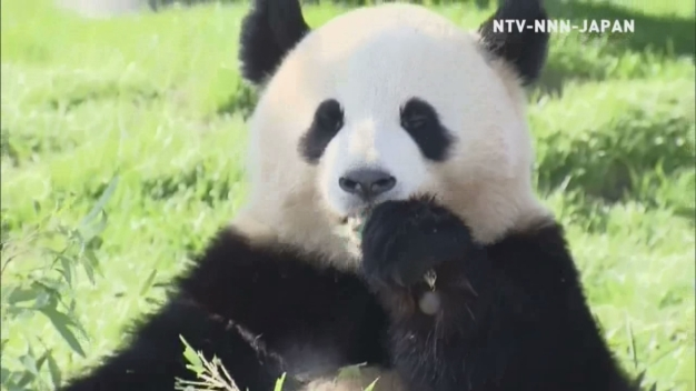 Twin Pandas Turn Two