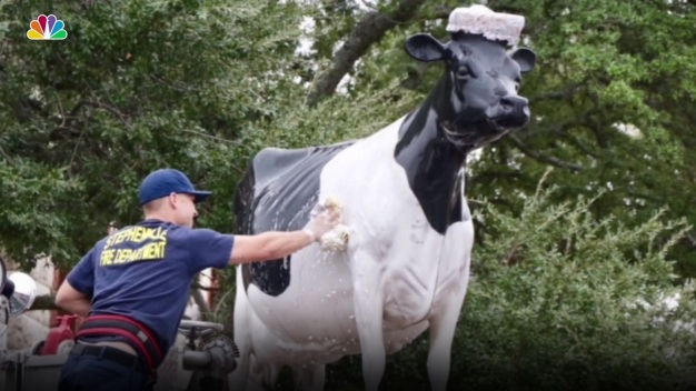 Stephenville's Iconic Bovine Gets a Bath