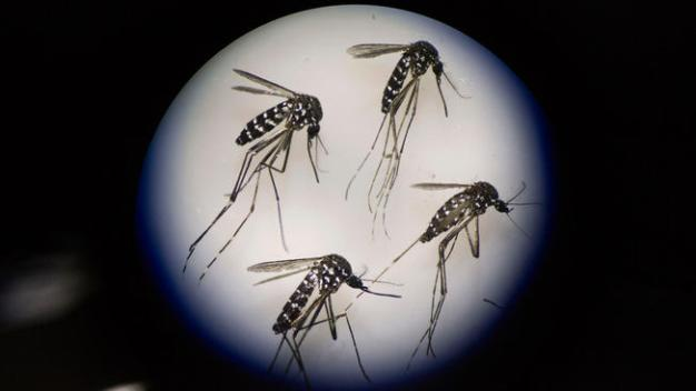 3rd Zika Infection by Texas Mosquito Reported This Year