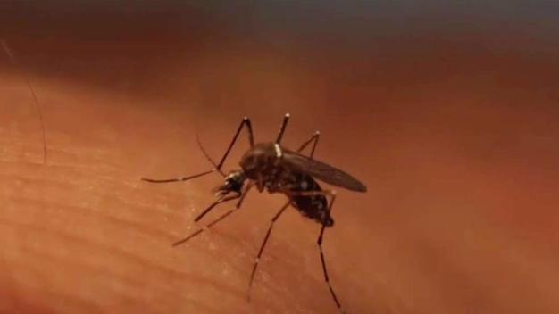 Texas Launches New Fight Against Zika Virus