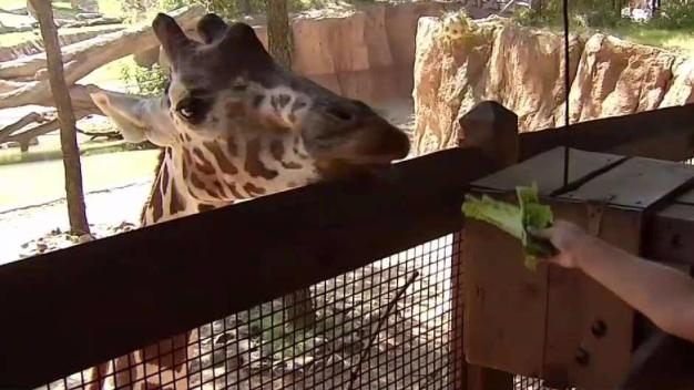Dallas Zoo to Host Annual Dollar Day Thursday