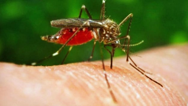 First West Nile-Related Death of 2017 in Dallas County