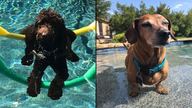 Dog Days of Summer - Buddy and Pancho