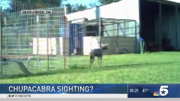 'Chupacabra' Sighting in Oklahoma?
