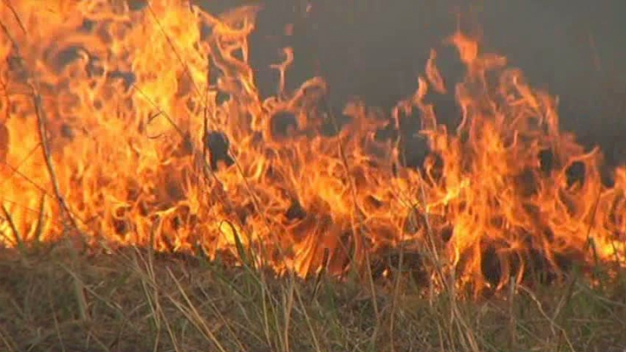 Texas Panhandle Wildfire Destroys 156 Structures