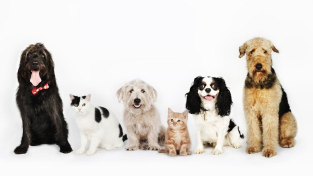 Clear the Shelters: Find a Loving Pet in North Texas