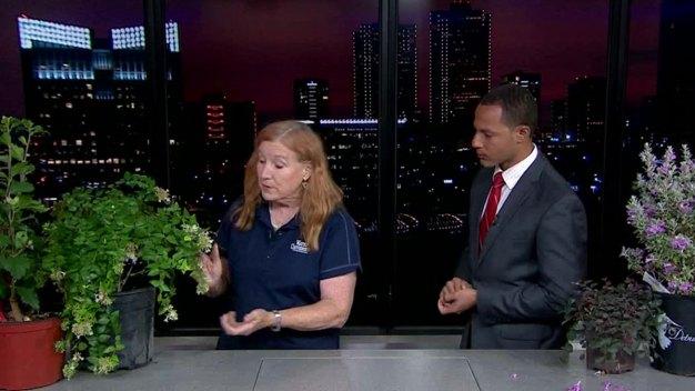 Heat-Tolerant Plants That Require Little Water