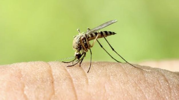 Dallas Co. Reports First WNV-Positive Traps of 2016