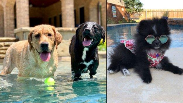 Dog Days of Summer - Gracie, Stella & Macielulu